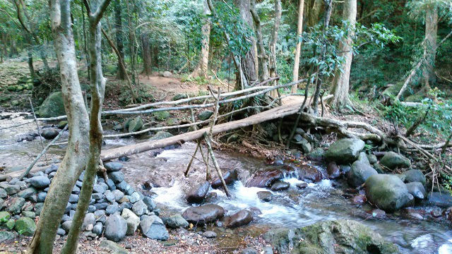 Part of the trail going to Kabigan Falls.